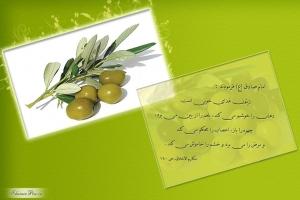 hadith-olive-zeytoon-01