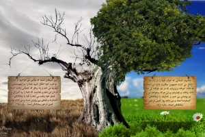 enfaq-hd-wallpaper